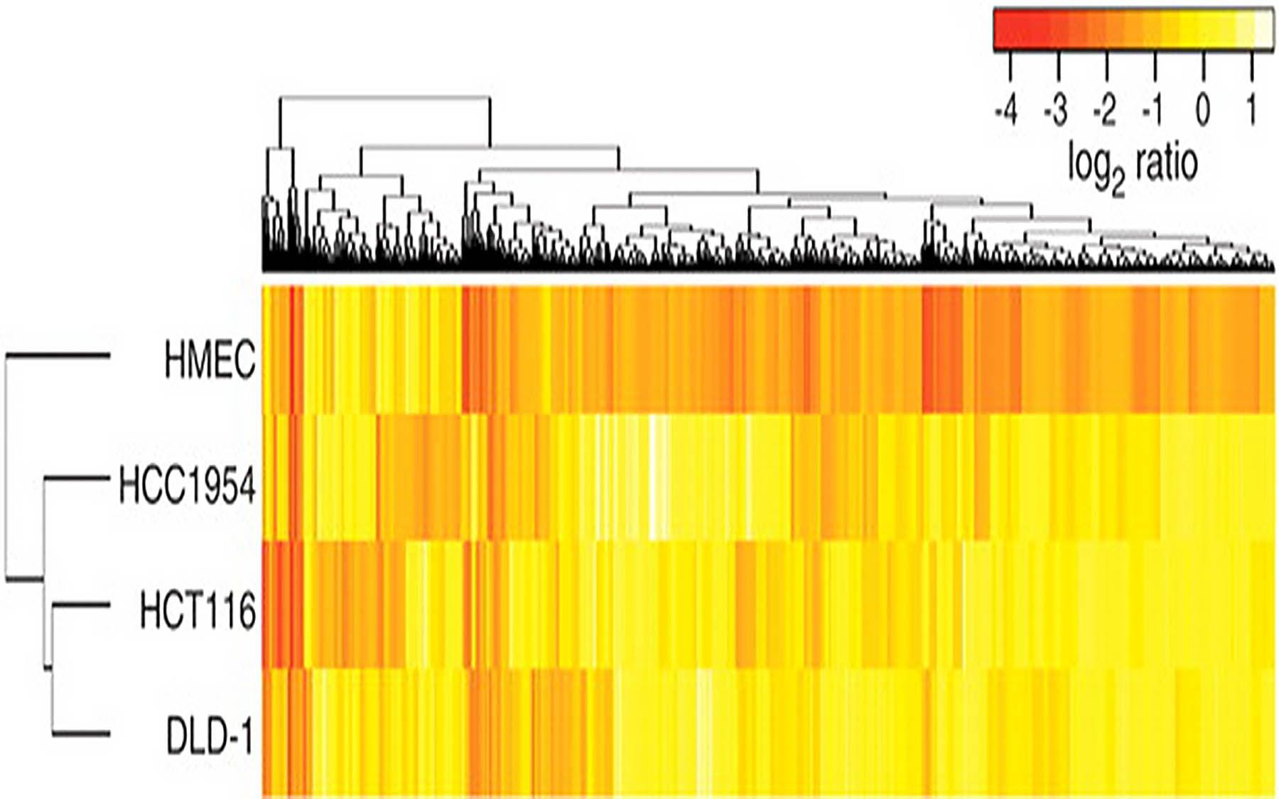 antiproliferative shRNAs