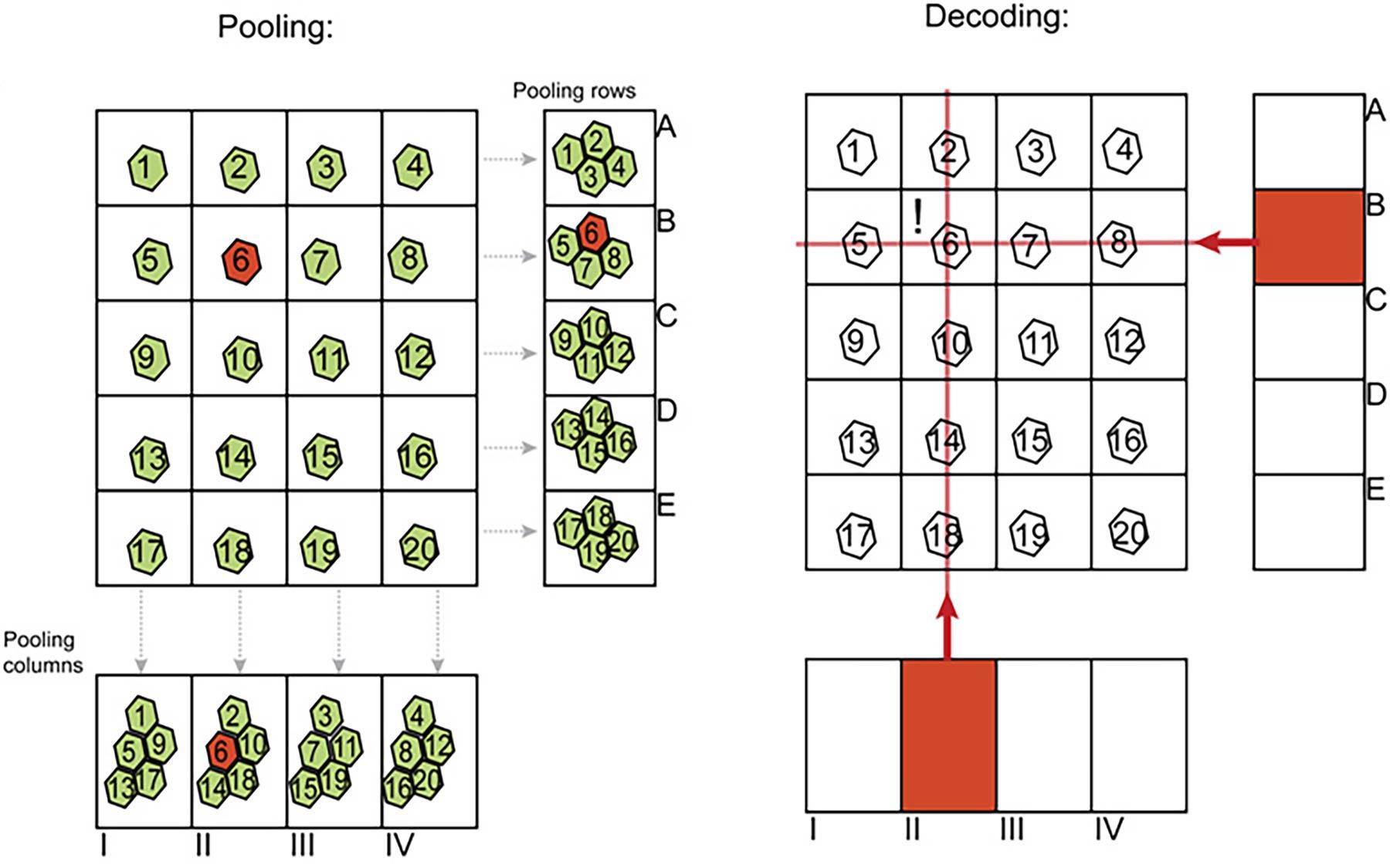 genome sudoku