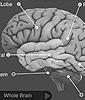dnalc brain 2010