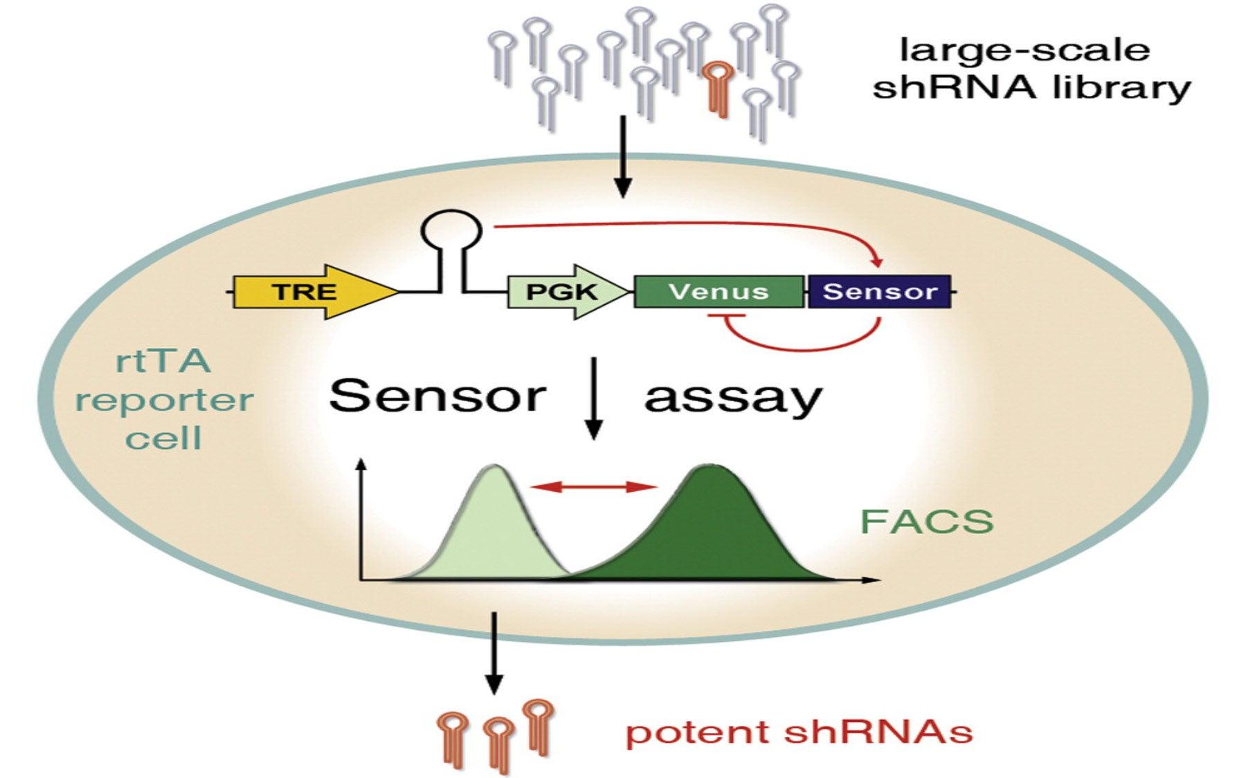 RNA sensor assay