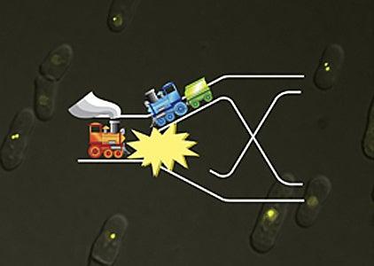 RNA interference
