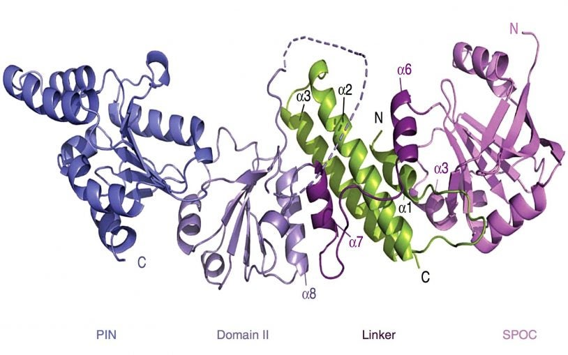CSHL team solves a protein complex's molecular structure to explain its role in gene silencing