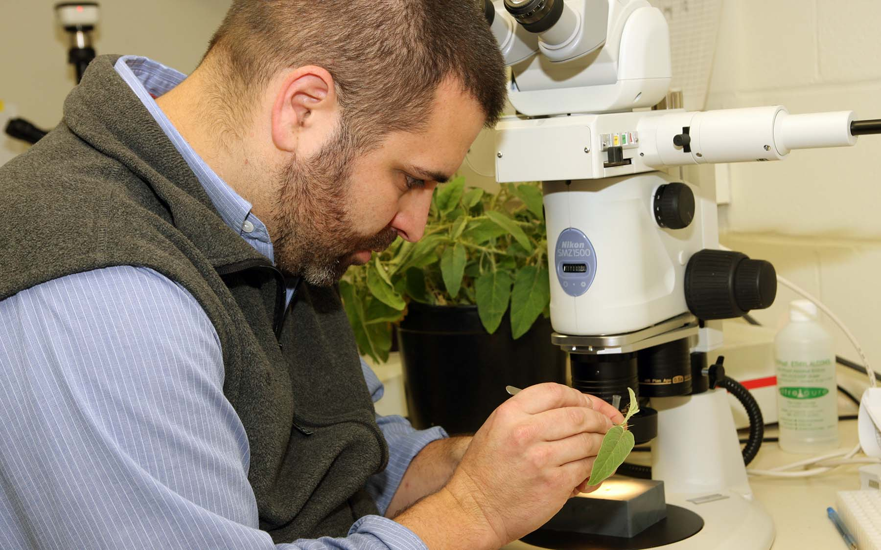 zach lippman examine plant