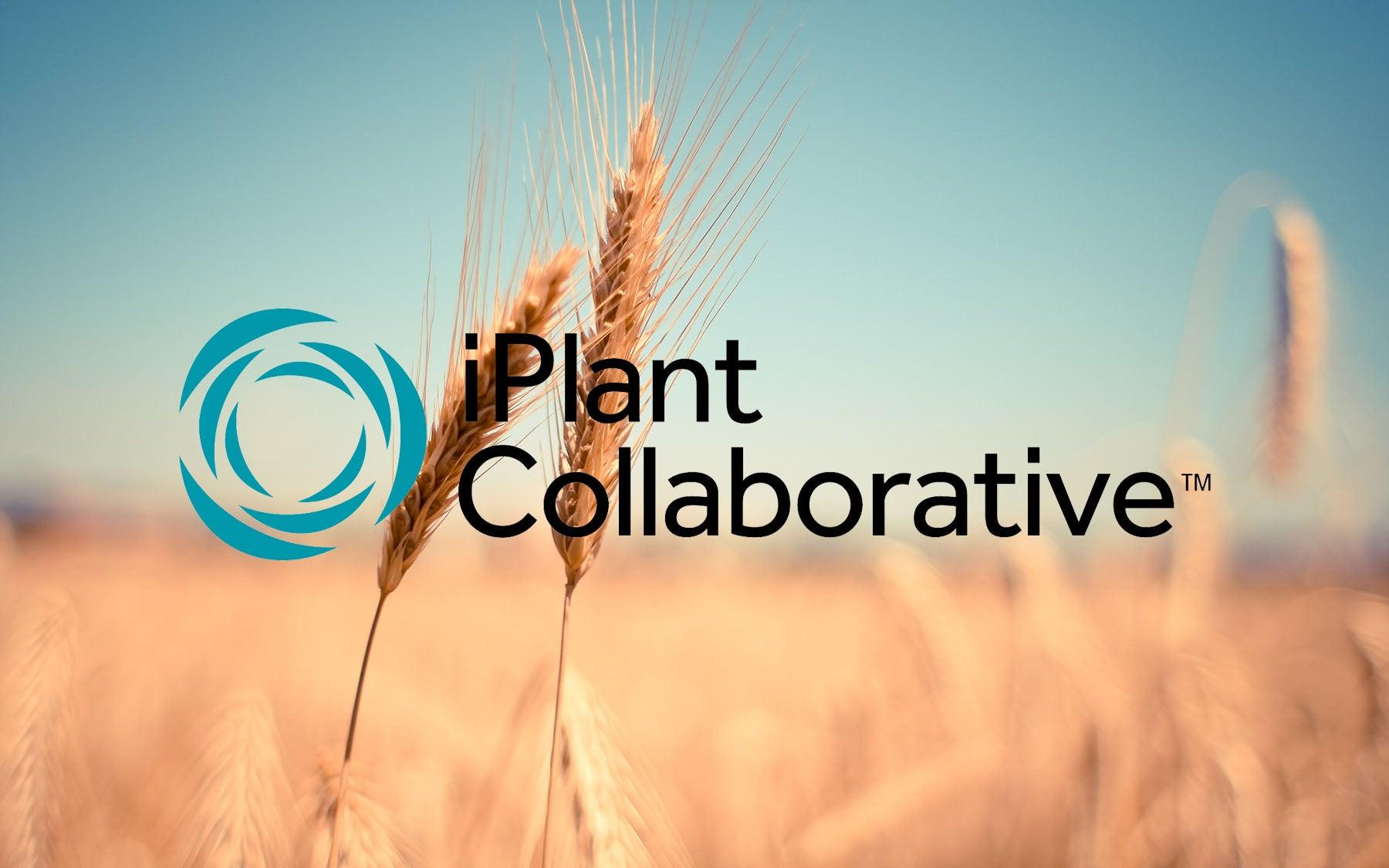 iPlant Collaborative