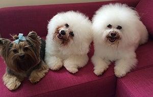 Monica's dogs Brioche, Cupcake & Sprinkles