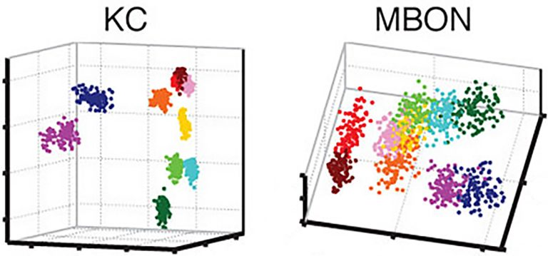 MBON graphs