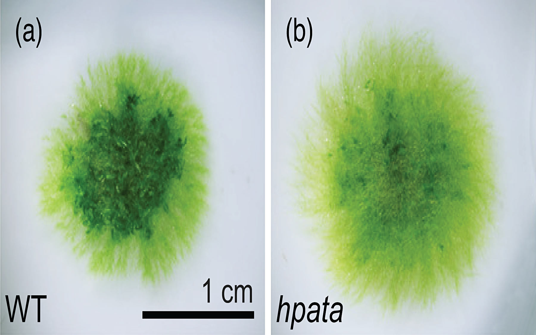 moss samples