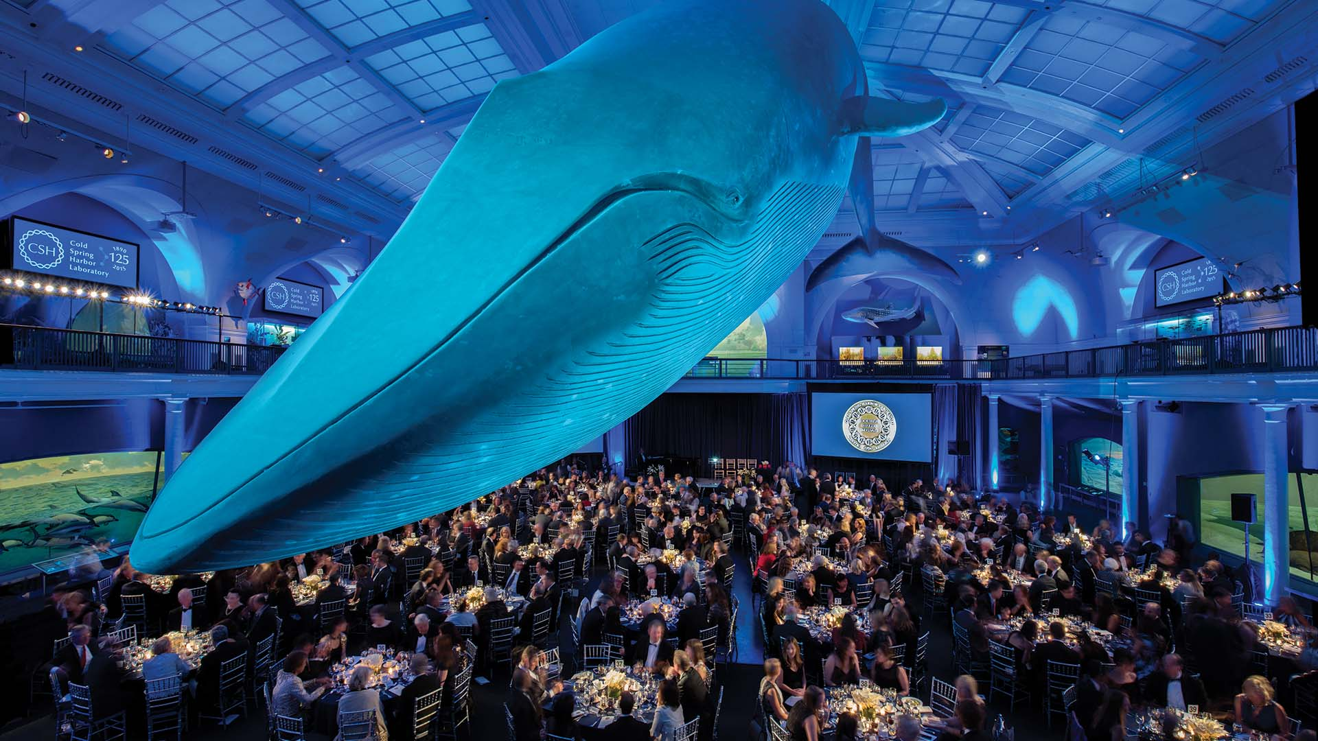 photo of whale at NYC Museum of Natural History