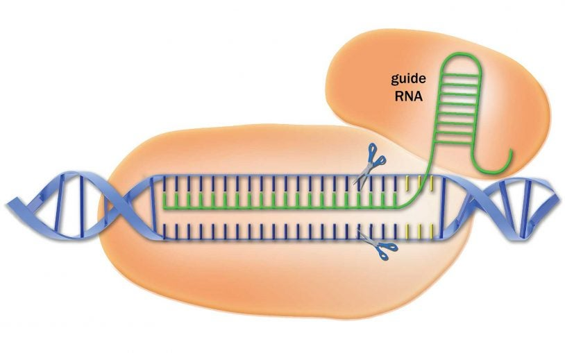 Library of CRISPR targeting sequences increases power and accuracy of the gene-editing method