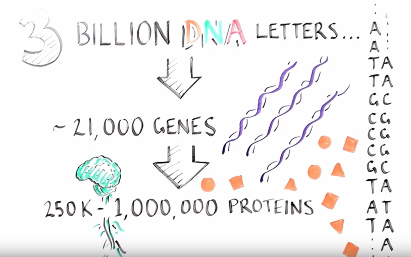 Just What is RNA Splicing?