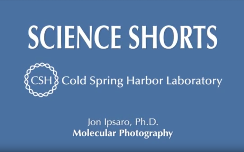 Molecular Photography by Jon Ipsaro, Ph.D.