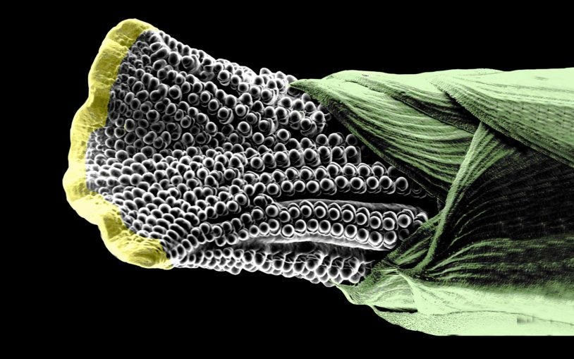 One experiment: What can scientists learn from an odd-looking mutant ear of corn?