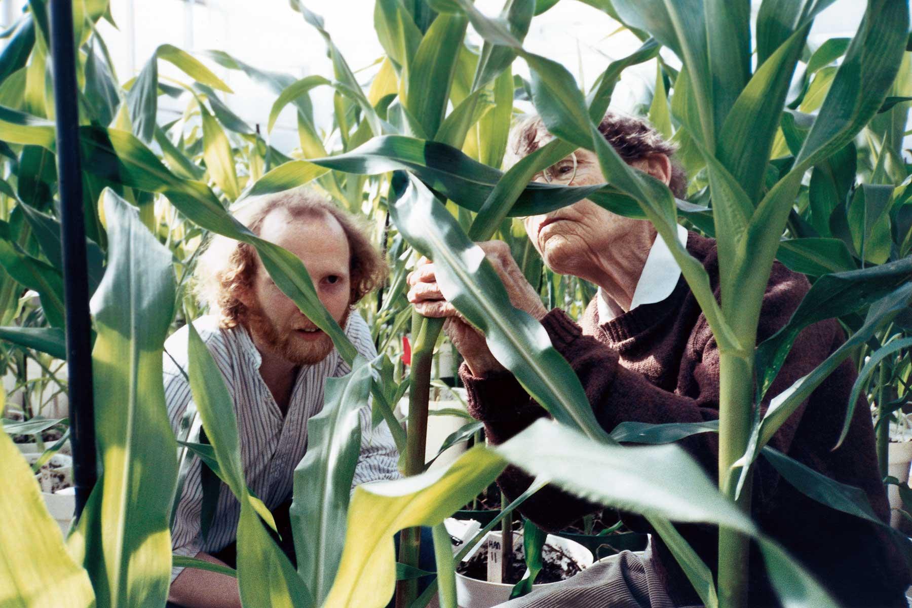 photo of Rob Martienssen and Barbara McClintock in cornfield