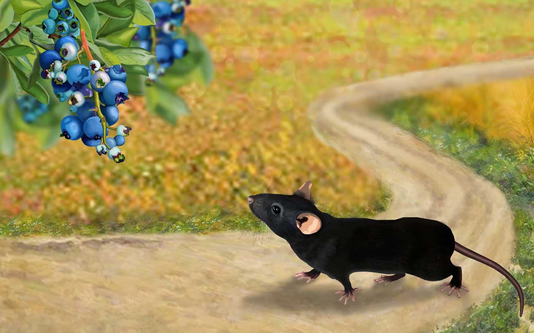 Mouse foraging Elena Nikanorovna