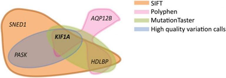 KIF1A gene