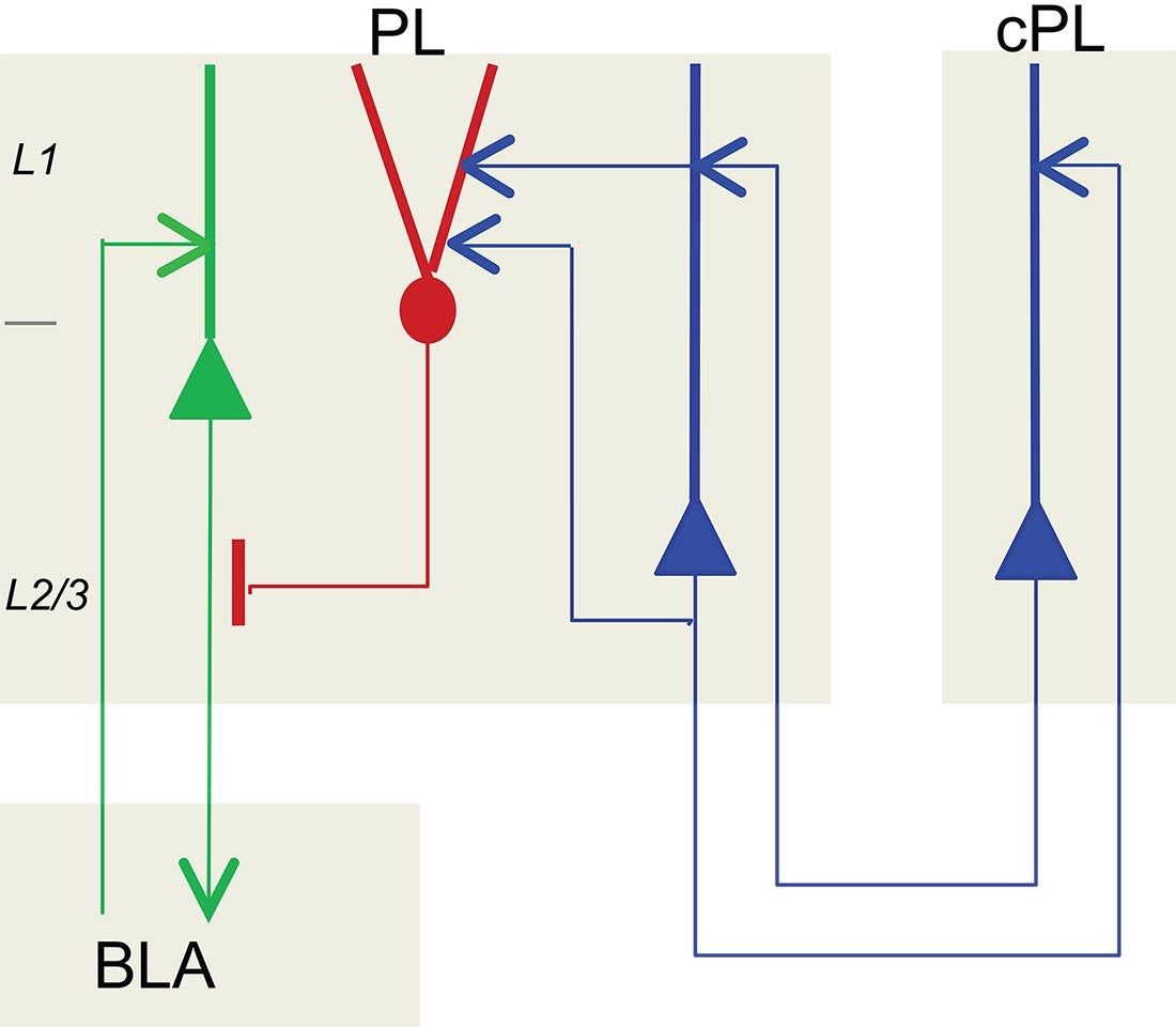 chandelier cell circuit diagram