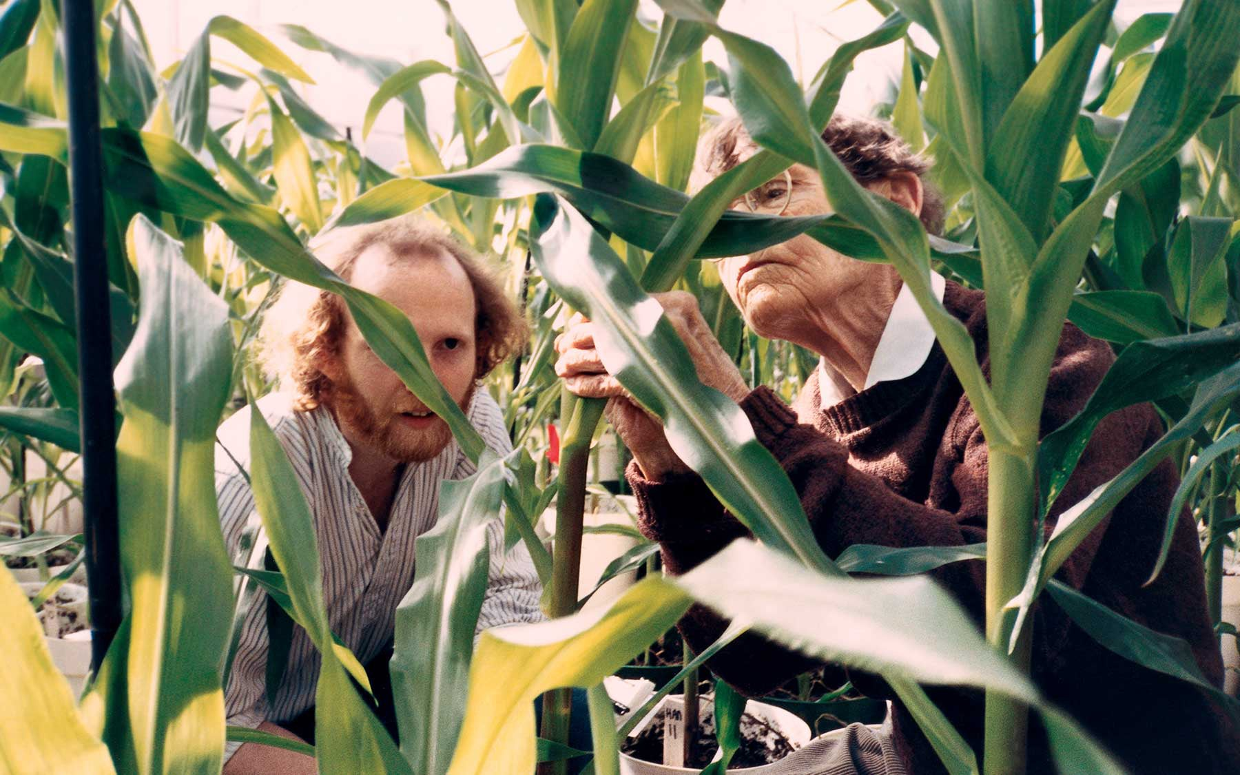 Rob Martienssen and Barbara McClintock