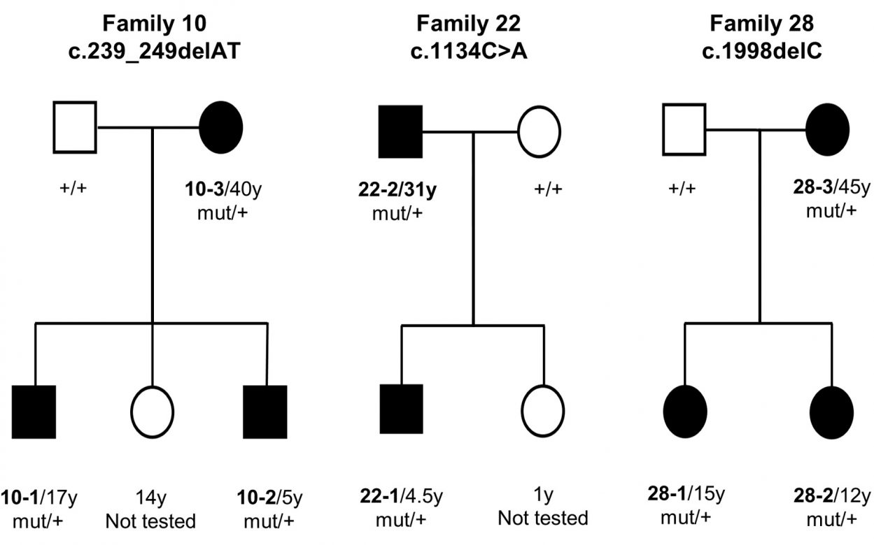 genetic pedigree chart
