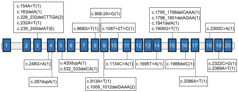 human genome schematic