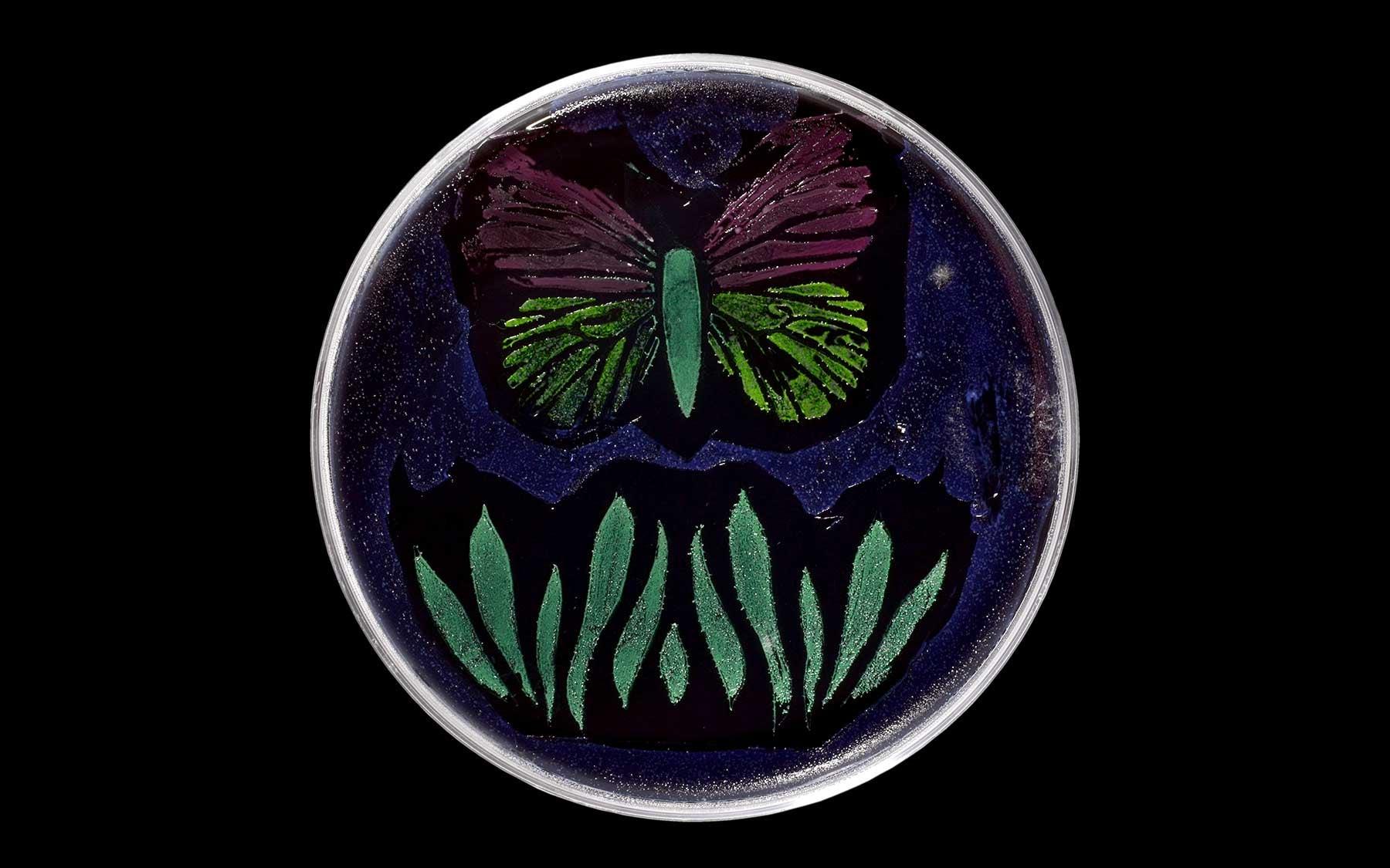 agar art butterfly