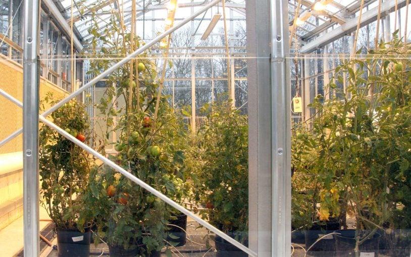 Woodbury greenhouse