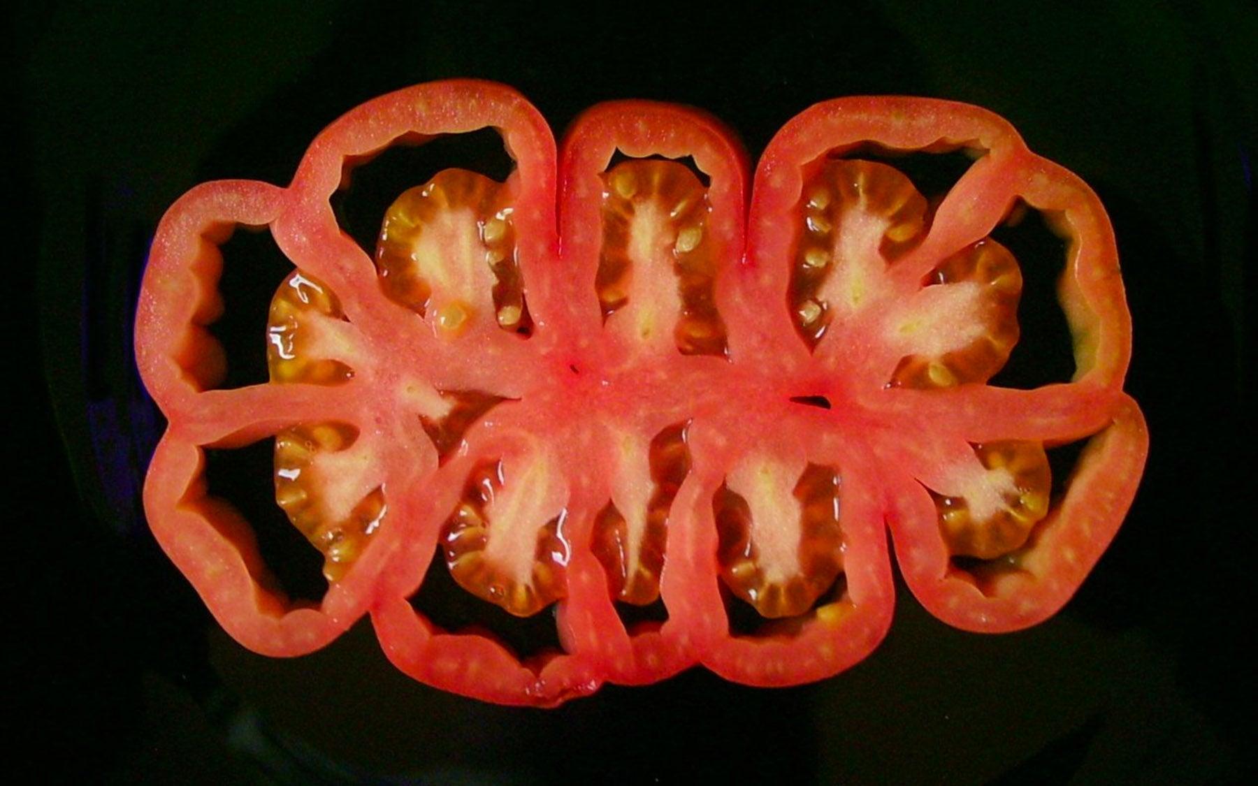 Lippman beefsteak tomato