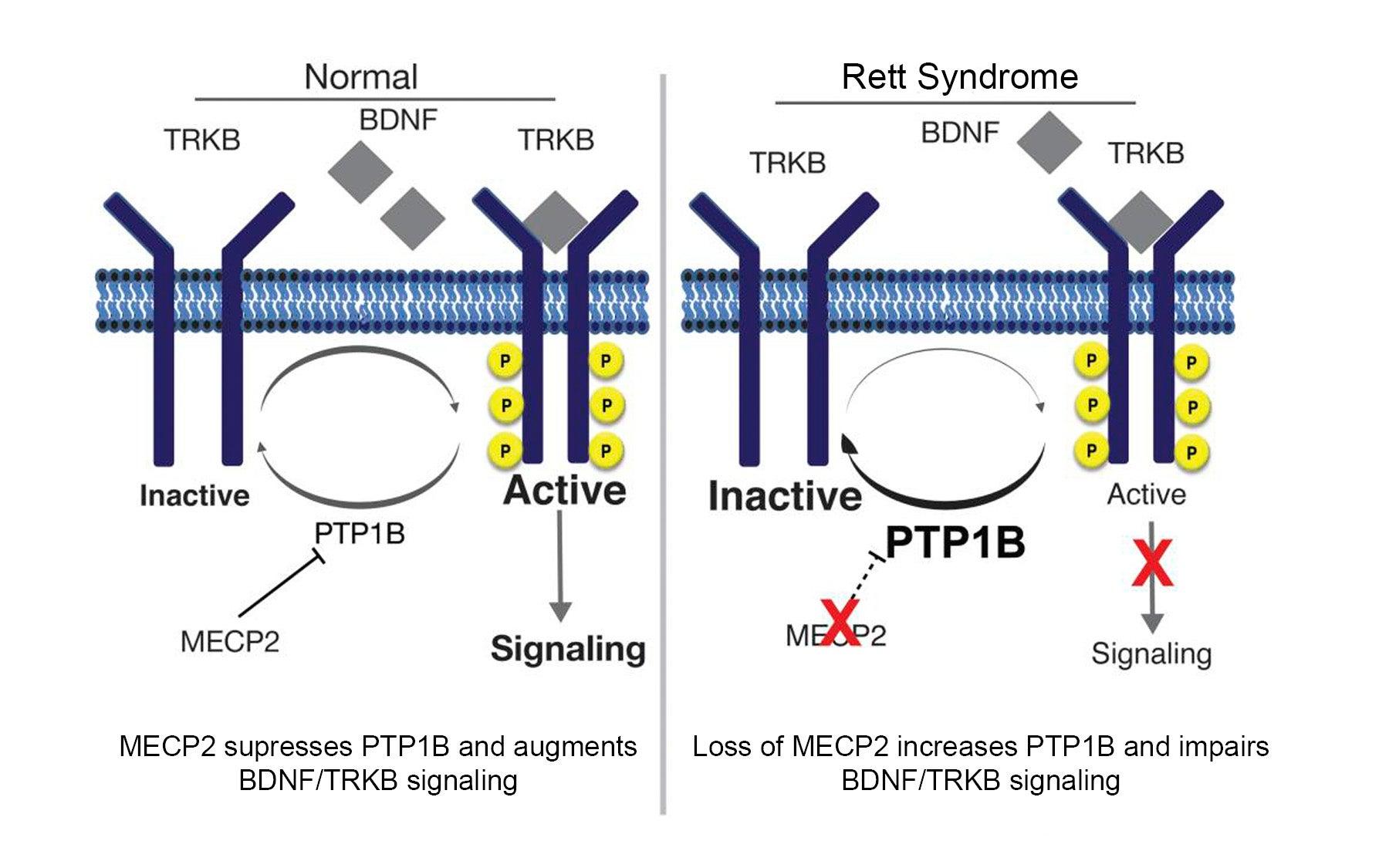 Nicholas Tonks Rett syndrome reversal