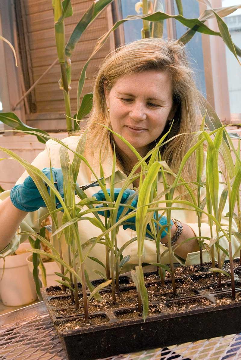 Ware-Plants-USDA