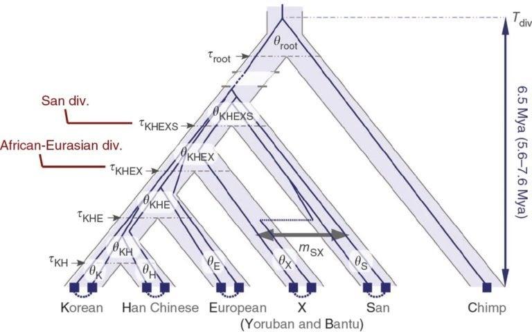 evolutionary tree of ancient human demography