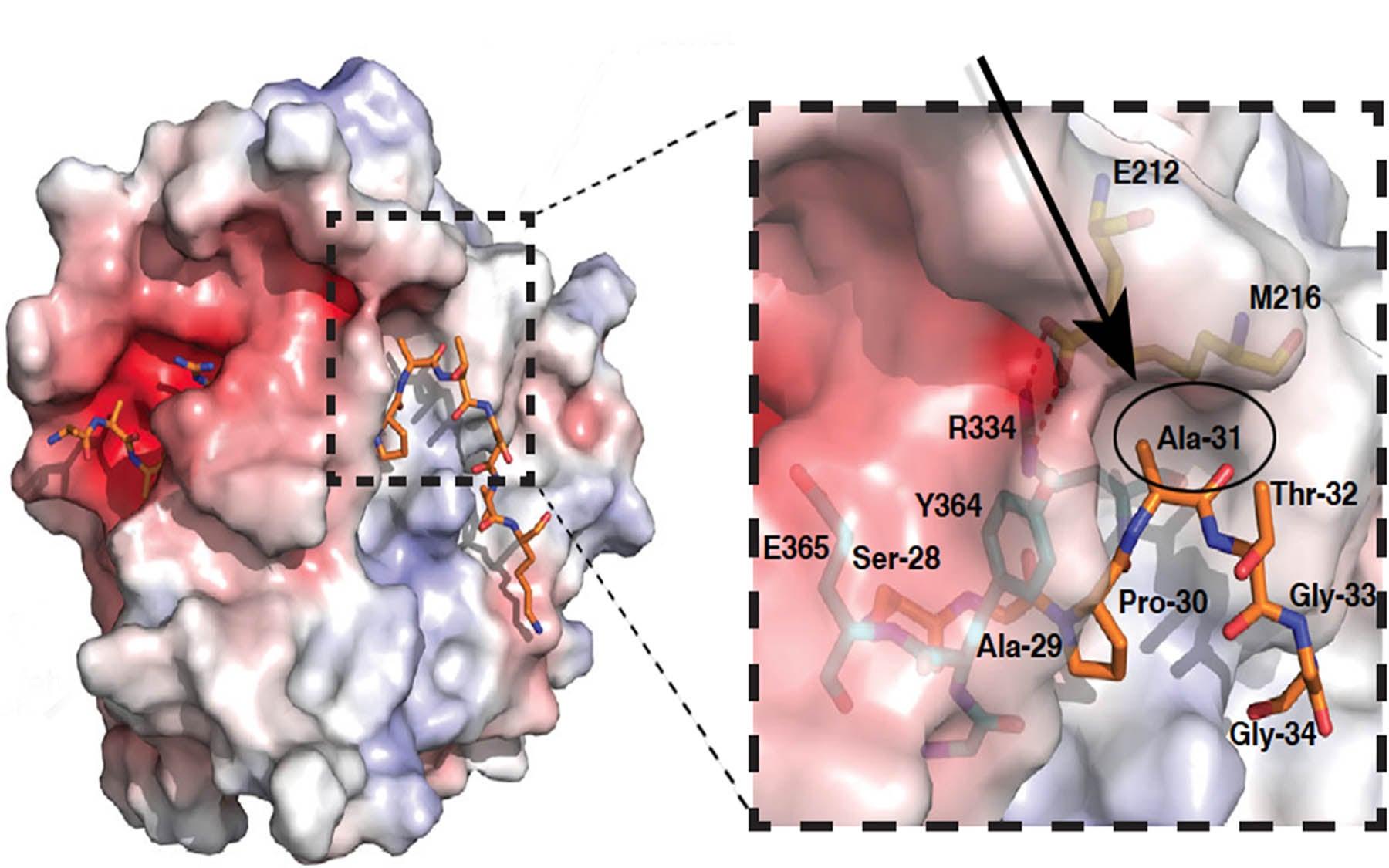 Martienssen Histonecode