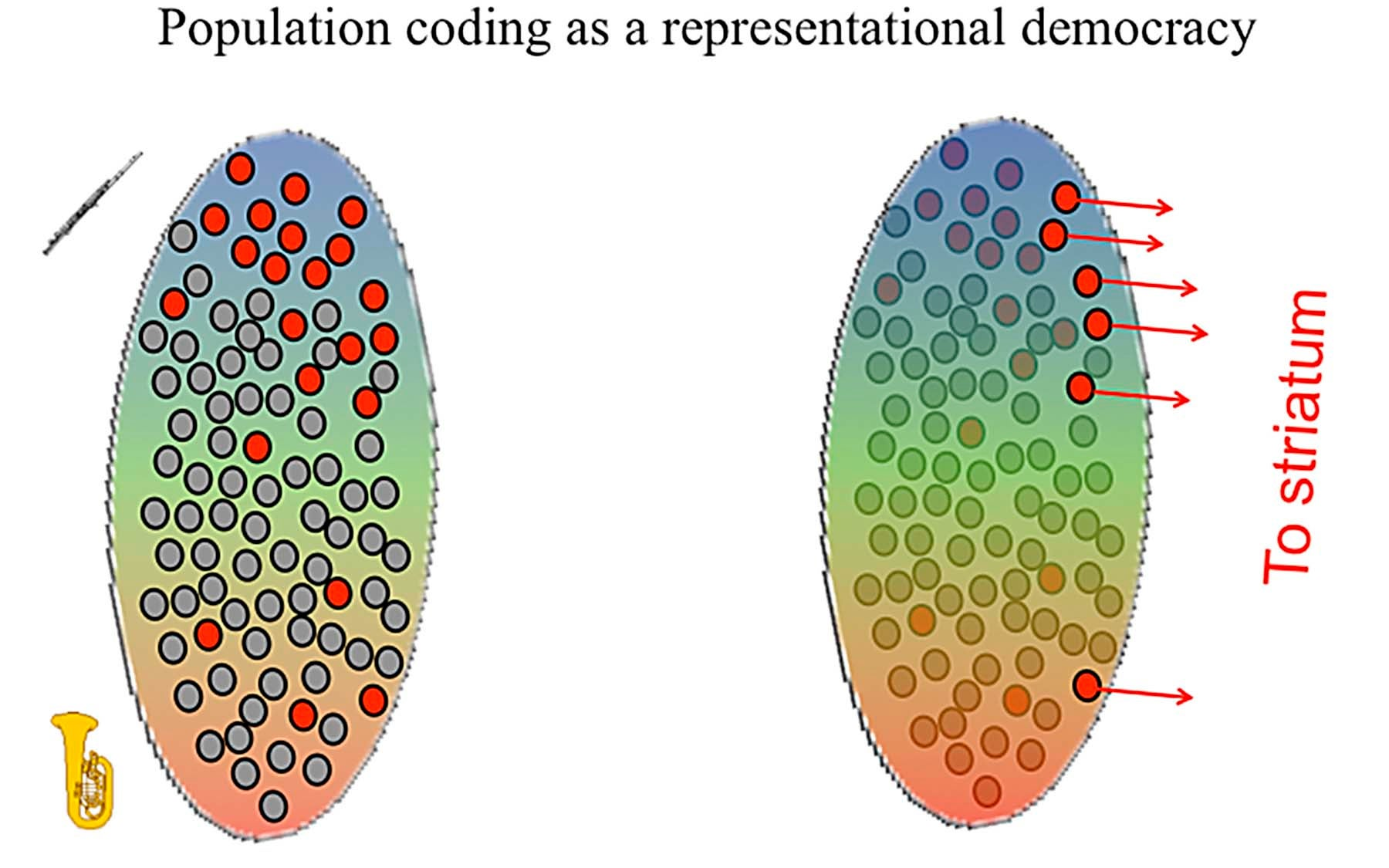 Zador population coding democracy