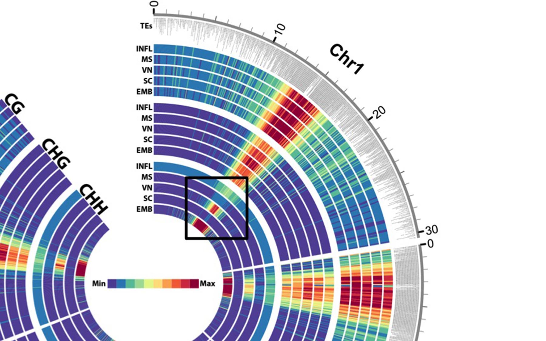 Cell heat map Martienssen