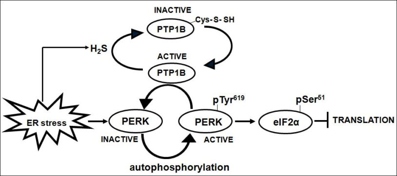 Nicholas Tonks PTP1B signaling