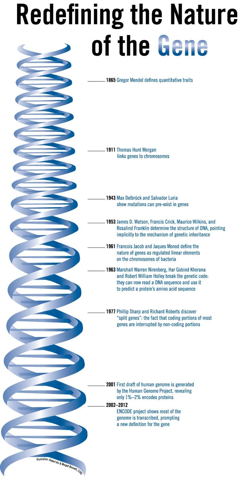 DNA Timeline ENCODE