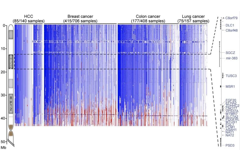 Clusters of cooperating tumor-suppressor genes are found in large regions deleted in common cancers
