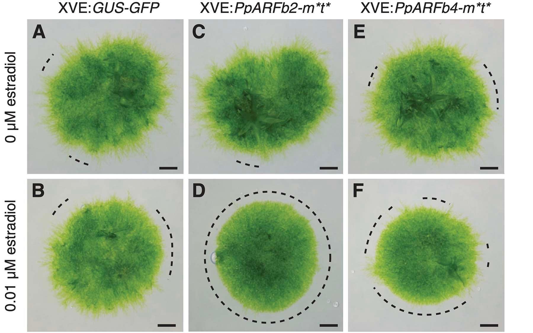 Plants Overexpressing Phenotype