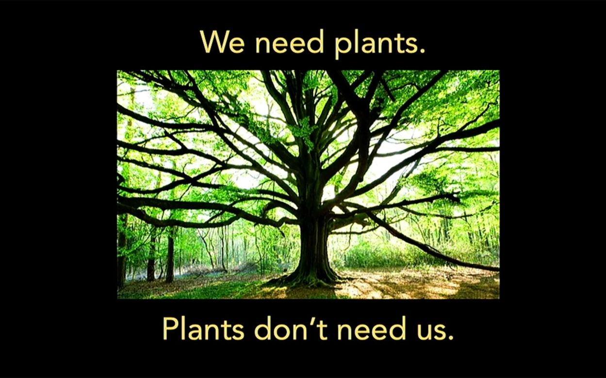 How do plants sense their environment
