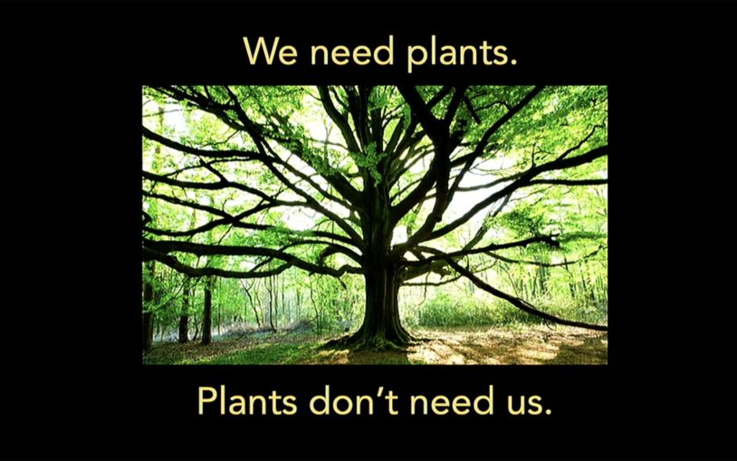 How do plants sense their environment