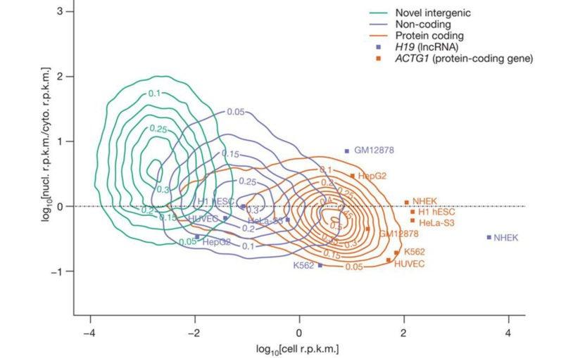human genome transcription
