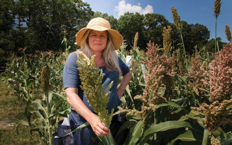 Profile: Doreen Ware champions the plant genome
