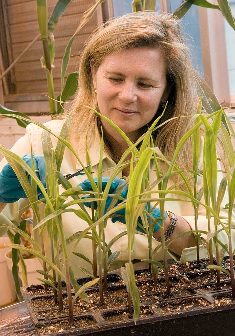 Doreen Ware Plants USDA