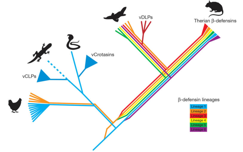 Cold Spring Harbor scientists are part of consortium that sequences platypus genome, unlocking secrets of evolution