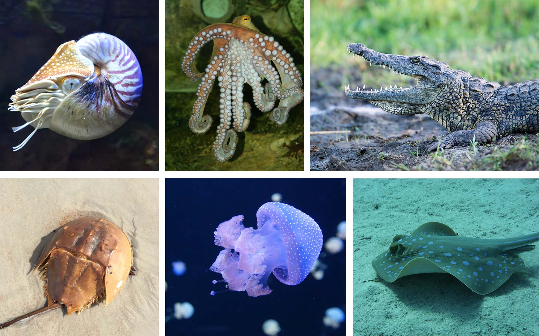 sea creature collage