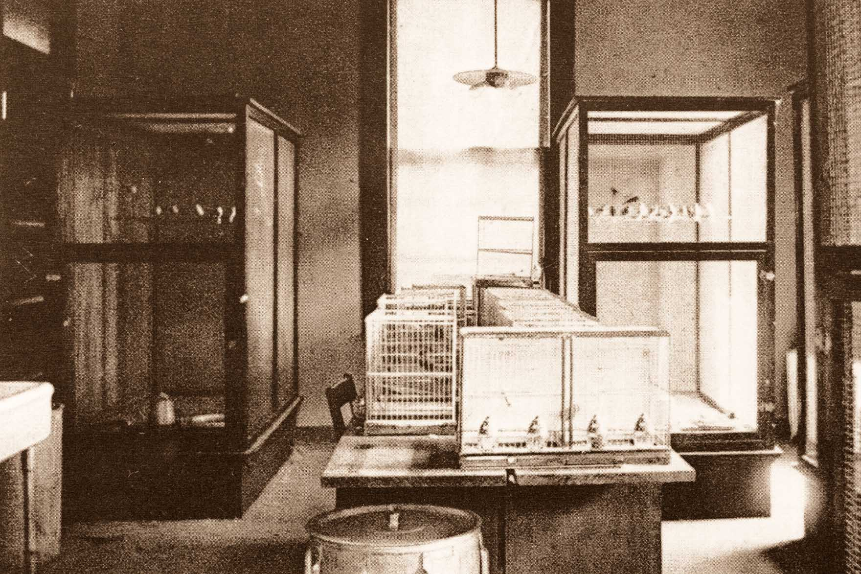 Breeding Room Main Building 1906