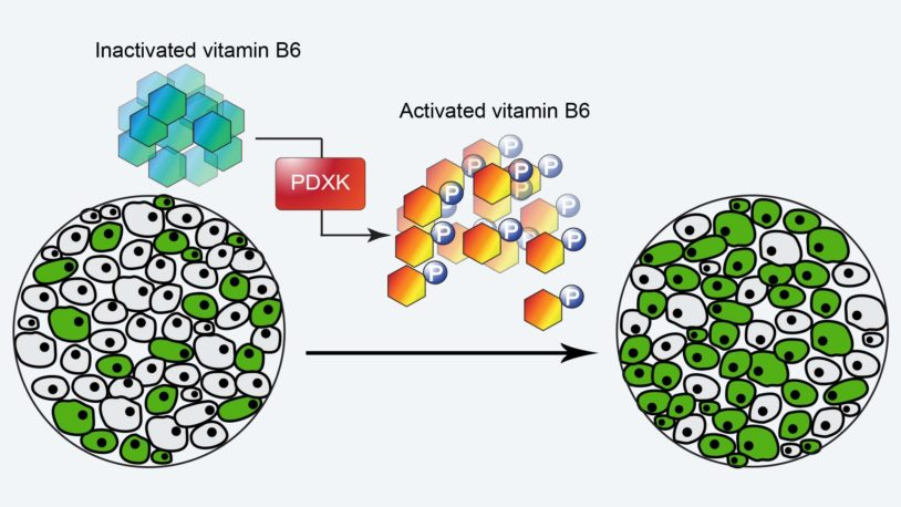 graphic of Vitamin B6 treating AML