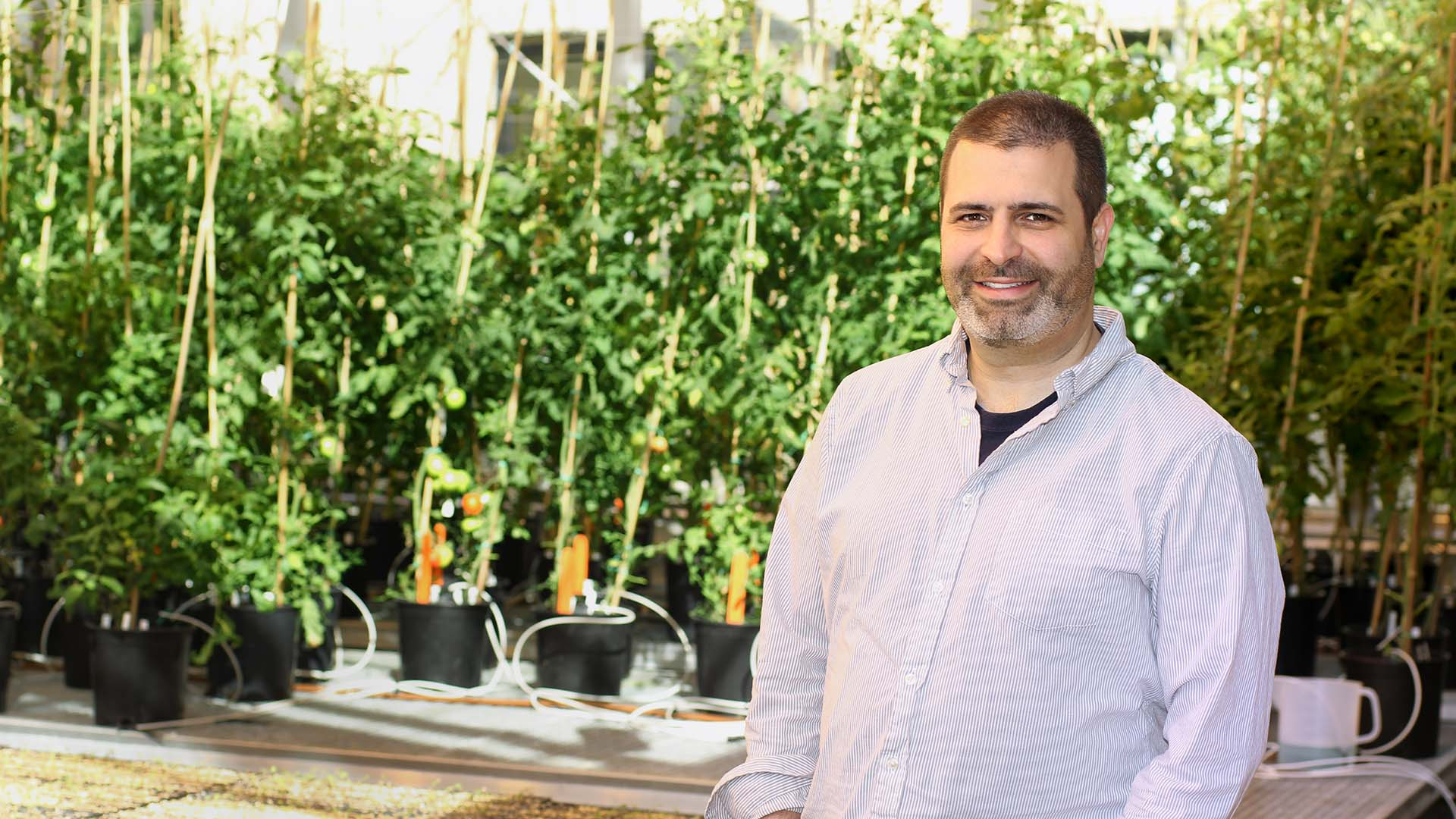 photo of Zach Lippman standing in front of tomato plants