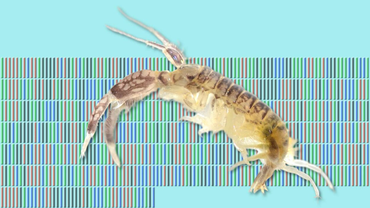 image of shrimp with barcoding in background