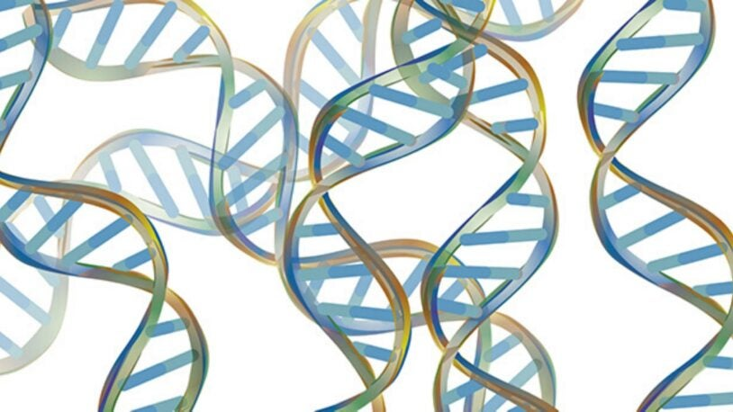 DNALC Live: DNA Structure