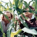 Barbara McClintock Corn Field hero image