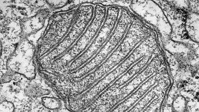 Mitochondria hero image